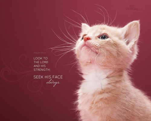 Look To The Lord